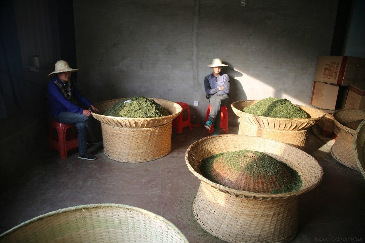 зеленый чай производство Мойчай.ру