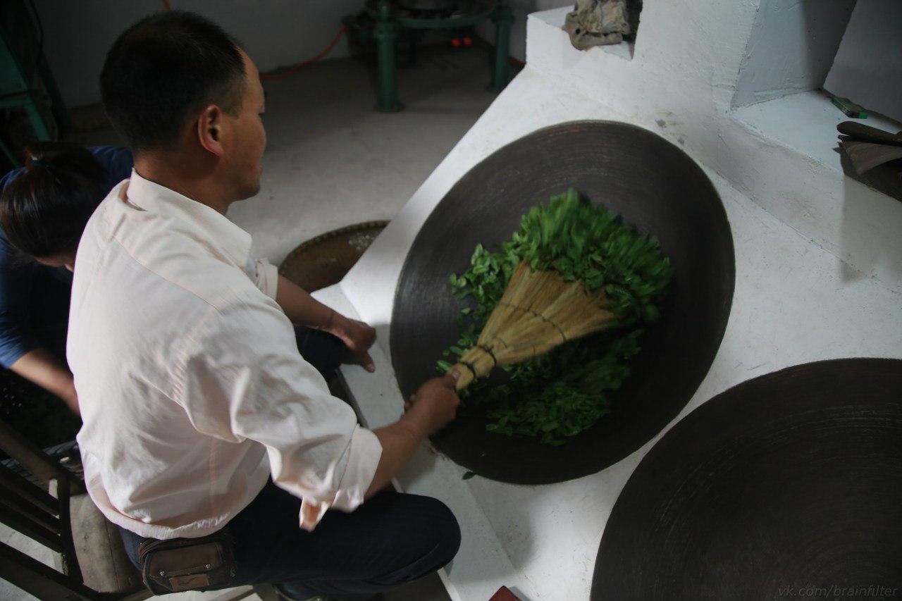 зеленый чай производство